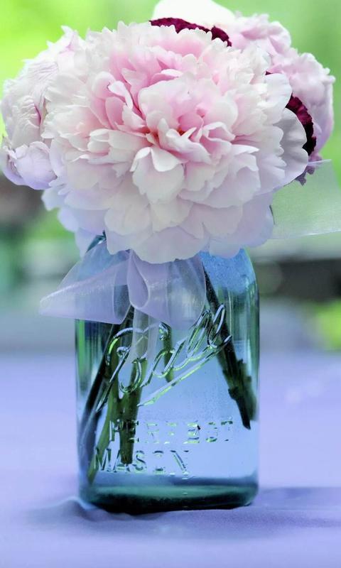 小清新唯美花朵高清壁纸