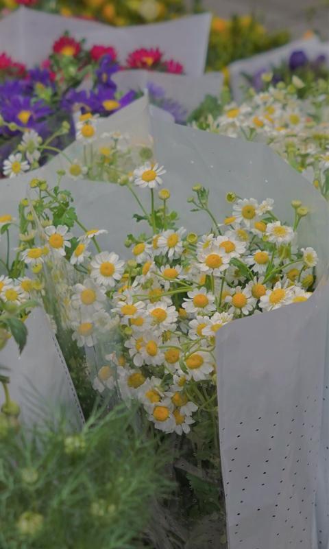 清新淡雅小雏菊花束背景图