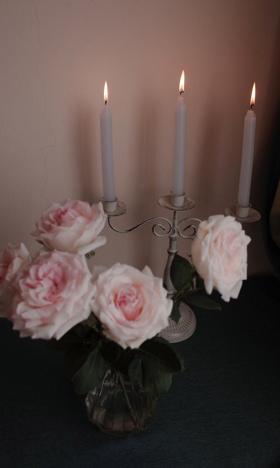 蔷薇烛台复古唯美摄影高清壁纸