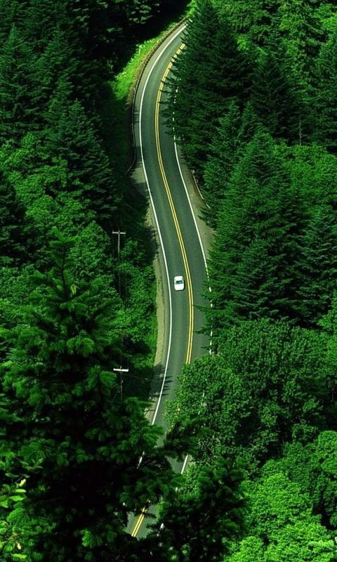 森林汽车之路壁纸图片