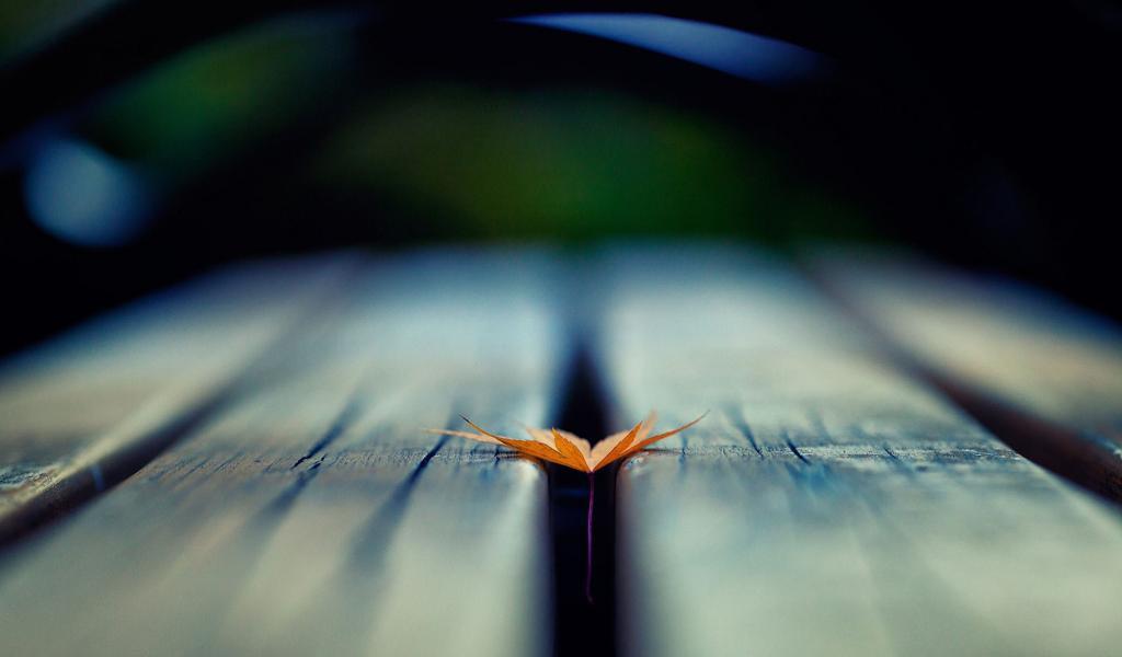 好看的木板上的一片落叶壁纸图片