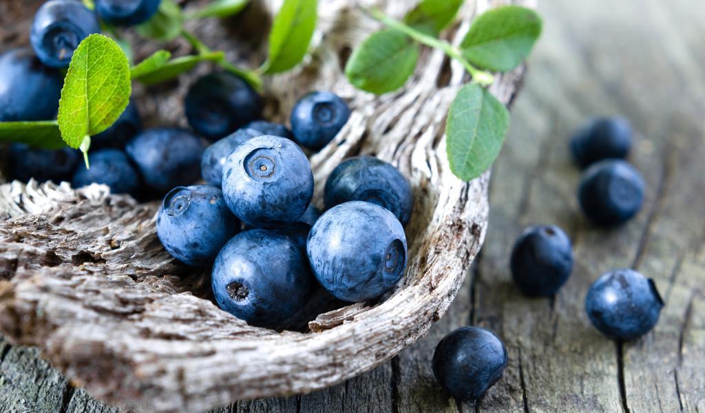 精美野生蓝莓壁纸图片