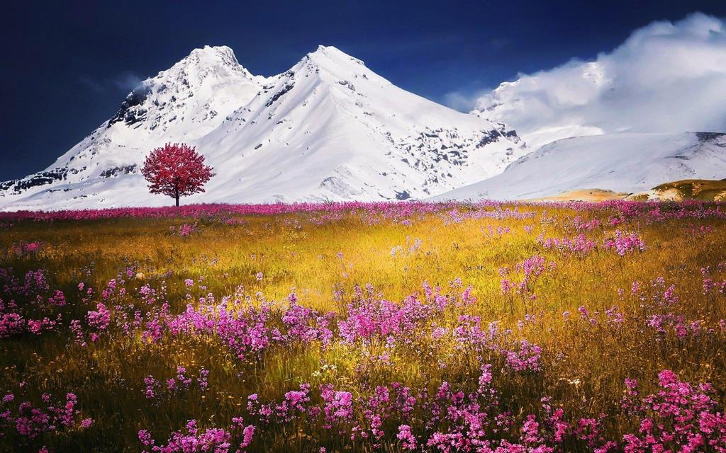 美丽的雪山下鲜花唯美风景桌面壁纸