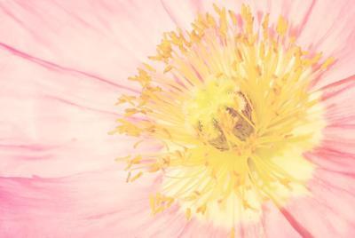 高清唯美花卉电脑桌面壁纸