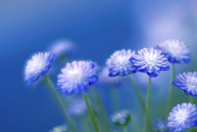 浪漫紫色花朵唯美高清壁纸