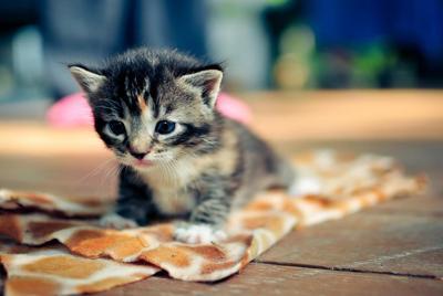 超萌可爱小猫壁纸桌面