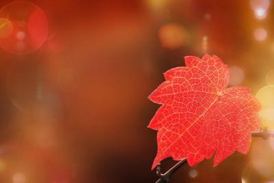 秋天红叶唯美高清壁纸桌面