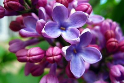 小清新花朵高清壁纸下载