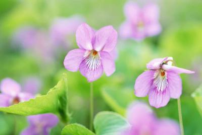 小清新唯美花朵桌面壁纸