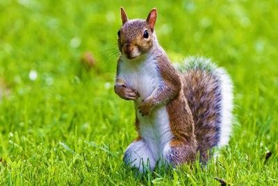 草地上可爱的松鼠高清壁纸