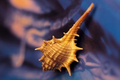 好看的贝壳壁纸图片