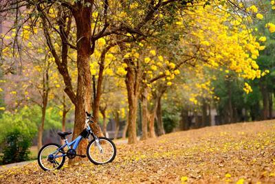 单车公园森林唯美壁纸桌面图片