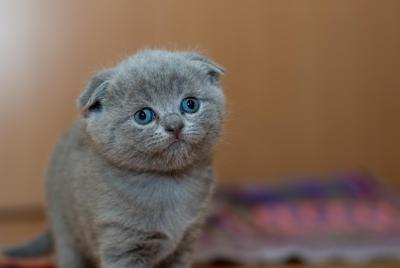 卖萌的可爱小奶猫图片壁纸