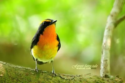 可爱的小鸟高清摄影图片
