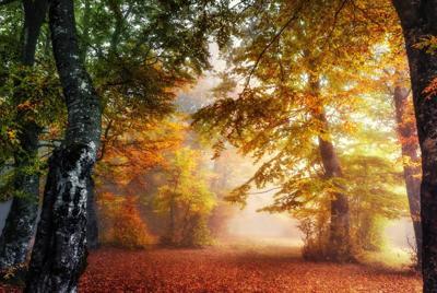 秋意正浓树林落叶唯美意境背景桌面壁纸