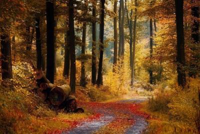 秋天黄色的树林壁纸