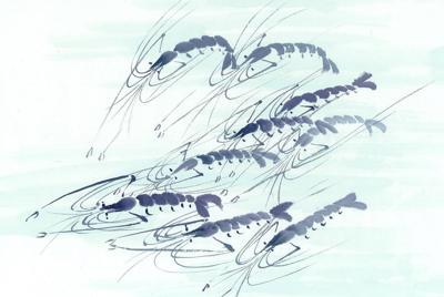 鱼虾水墨画壁纸