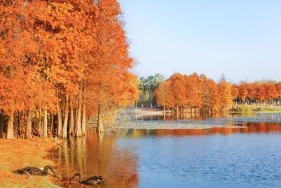 冬日好看的风景壁纸唯美意境落羽杉图图片