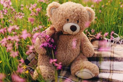 最新花丛里的泰迪熊图片壁纸