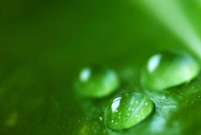 绿叶上的水滴电脑壁纸大图