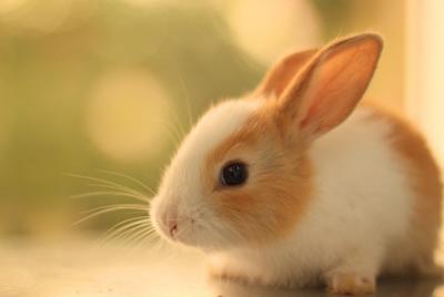 少女心粉色系可爱兔子壁纸图片