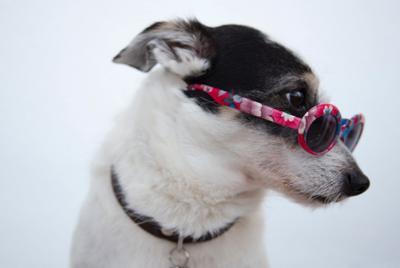 最新戴墨镜酷酷的宠物狗写真摄影高清电脑壁纸图片