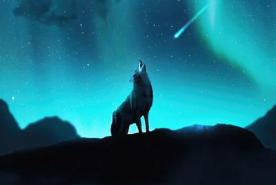好看的夜晚北极光狼嚎叫壁纸图片