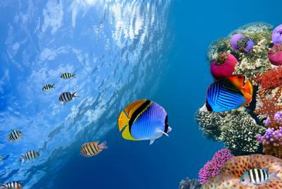 海洋鱼水下珊瑚海底世界电脑壁纸图片下载