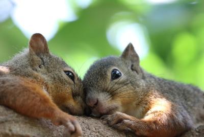 精美两只相爱的小松鼠图片壁纸图片