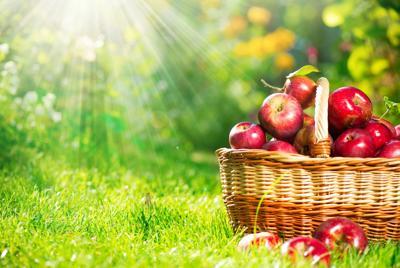 精美红色苹果,篮子,水果,高清图片电脑桌面壁纸