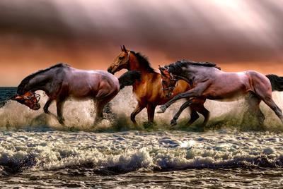 高清海边海水海滩三匹马背景图