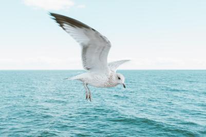 大海海鸥壁纸高清图片大全