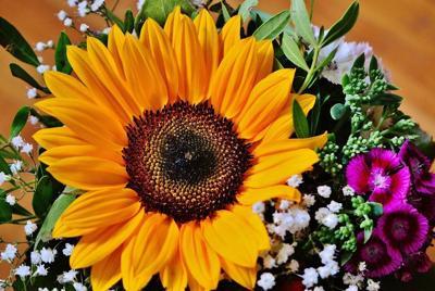 漂亮的向日葵的花电脑桌面壁纸