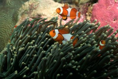 海底好看的珊瑚海葵壁纸图片