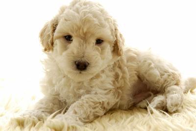 可爱的小狗壁纸图片