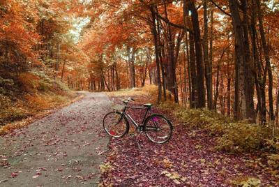 秋日单车唯美壁纸桌面