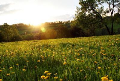 阳光与树自然之杰作唯美桌面壁纸