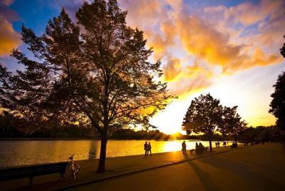 大自然之美:阳光与树唯美桌面壁纸